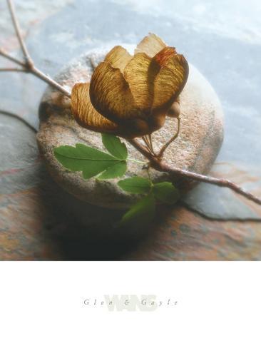 Branch on Stone Framed Art Print