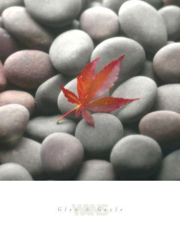Leaf on Stone Art Print