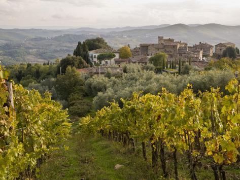 Vineyards in Hamlet of Castello Di Volpaia, Near Radda in Chianti Photographic Print