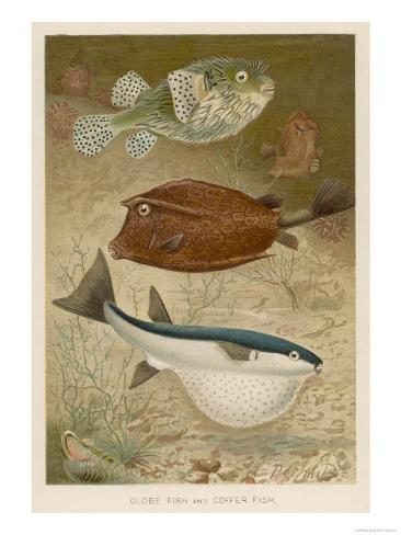Globe Fish and Coffer Fish Swimming Together Giclee Print