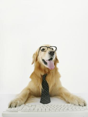 Golden Retriever Using Computer Stretched Canvas Print