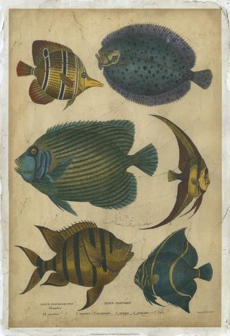 Goldsmith's Spinous Fishes Art Print