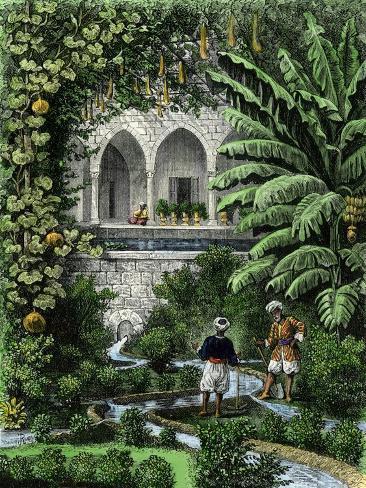 Gourds Grown as a Vine in an Arab Garden, Palestine, 19th Century Giclee Print
