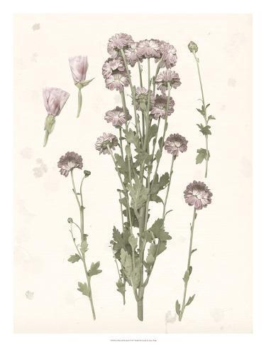 Pressed Blooms I Art Print