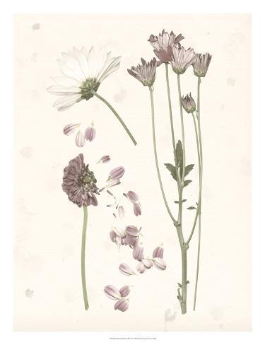 Pressed Blooms II Art Print