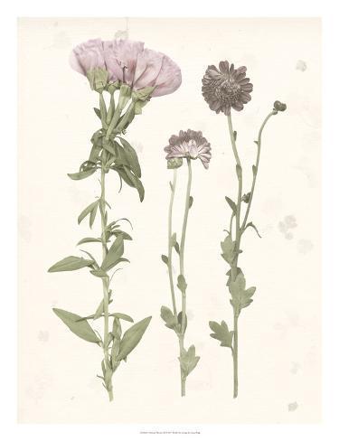 Pressed Blooms III Art Print