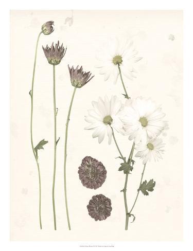 Pressed Blooms IV Art Print