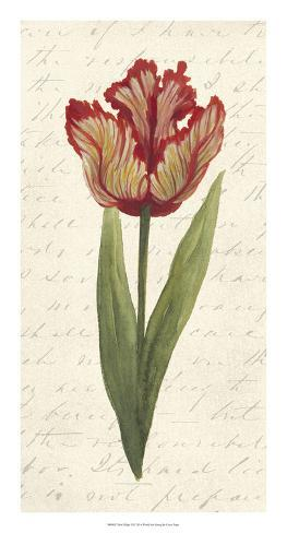 Twin Tulips II Giclee Print