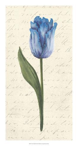 Twin Tulips III Giclee Print