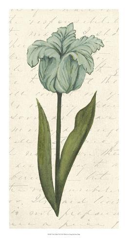 Twin Tulips VI Giclee Print