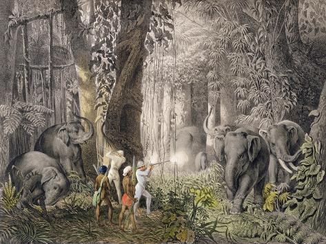 Elephant Hunt in Logalla, c.1859 Giclee Print