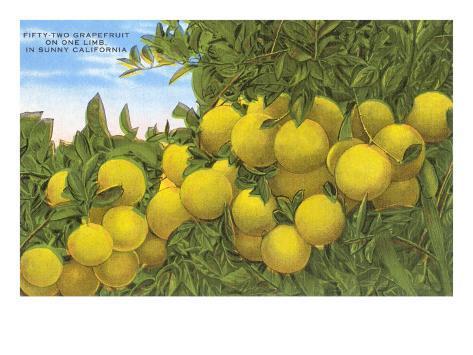 Grapefruit Taidevedos