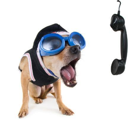A Cute Chihuahua On The Phone Photographic Print