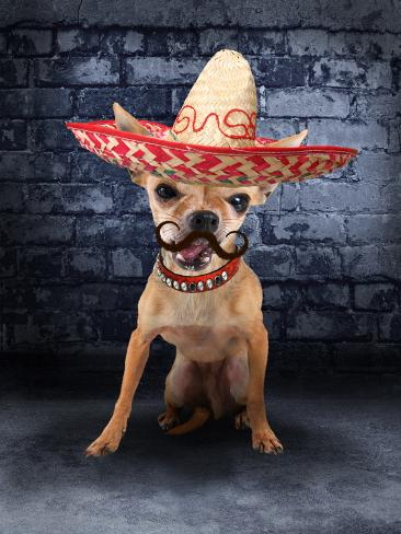 A Tiny Chihuahua With A Sombrero Hat On Photographic Print