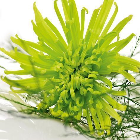 Green Overture Konst på glas