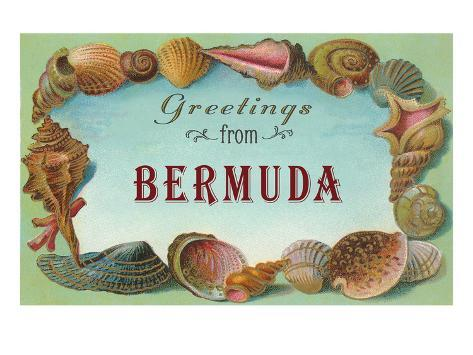 Greetings from Bermuda, Seashells Stretched Canvas Print