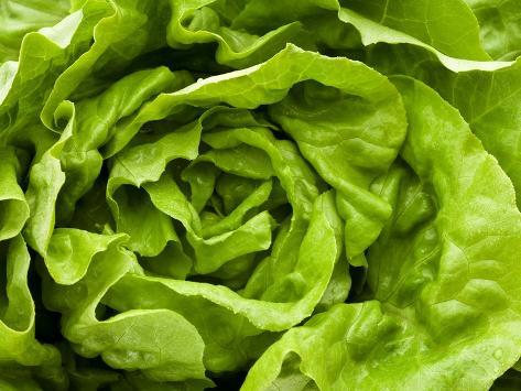 Fresh Lettuce Photographic Print