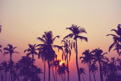 Silhouette of Palm Trees at Sunset, Vintage Filter Stampa fotografica