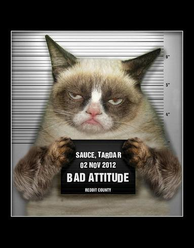 Grumpy Cat Sorry