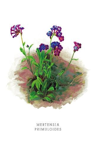 Mertensia Primuloides Decalcomania da muro