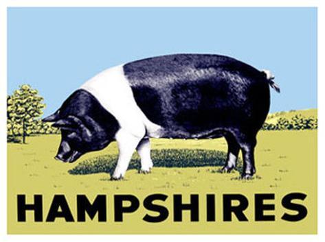 Hampshires Giclee Print
