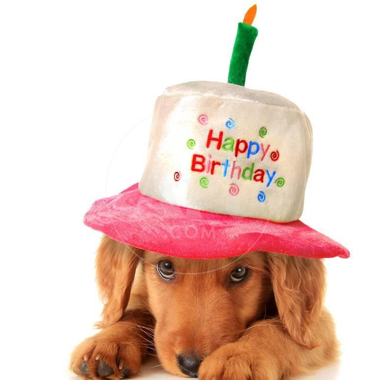 A Golden Retriever Puppy Wearing A Happy Birthday Hat Photographic
