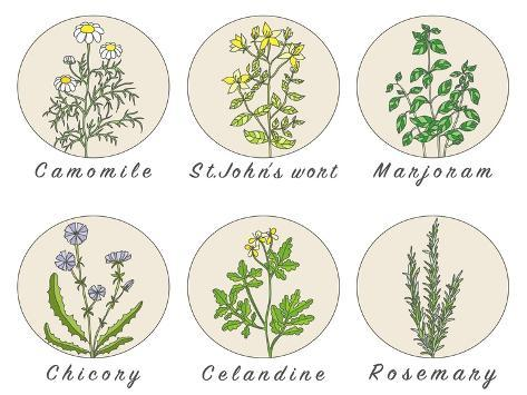 Set of Spices, Medicinal Herbs and Officinale Healing Plants Icons. Hand Drawn Illustrations. Botan Stampa artistica