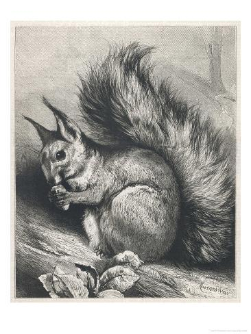 Red Squirrel Eating a Nut Giclee Print