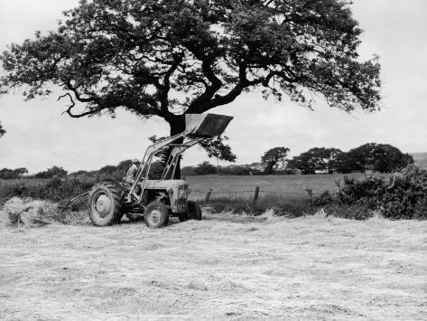 Harvesting with an International Cutter by a Massey-Fergusson 35 Tractor Fitted with a Mill Loader Photographic Print