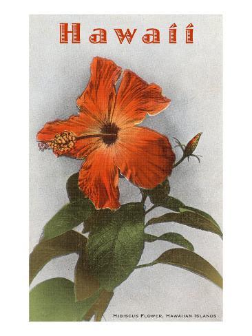 Hawaii, Hibiscus Flower Art Print
