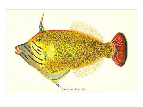 Hawaiian Fish, Oili Art Print