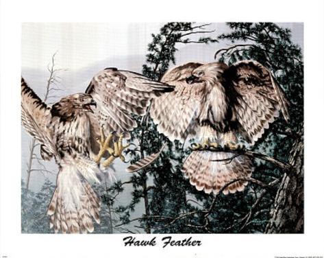 Hawk Feathers (Rusty) Mini Poster