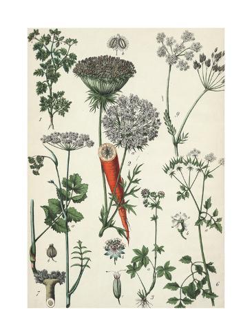 Heads of Flowering Weeds with Root Vegetable Art Print
