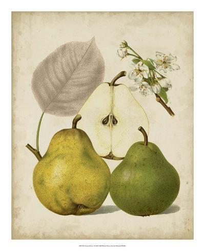 Harvest Pears I Giclée-vedos