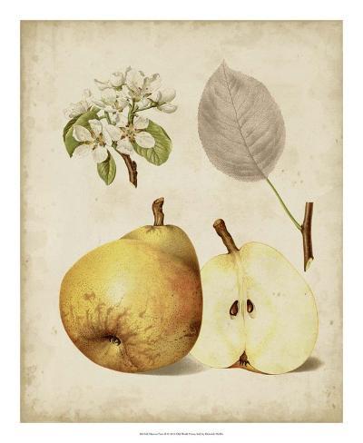 Harvest Pears II Giclée-vedos