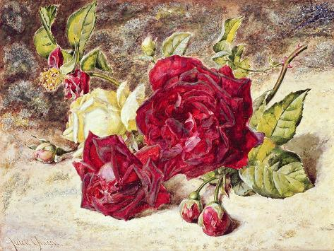 One White and Two Red Roses and Buds Stampa giclée