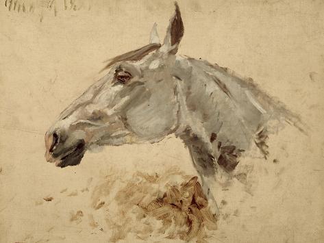 Testo Di Cavallo Giclee Print