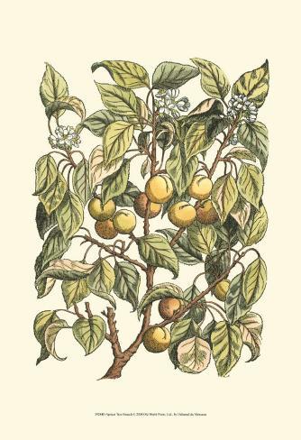 Apricot Tree Branch Art Print