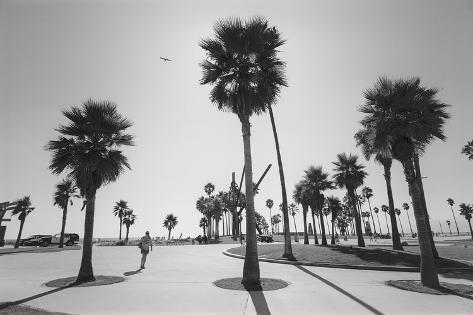 Palme A Venice Beach, Los Angeles (Sticker Murale) Decalcomania Da