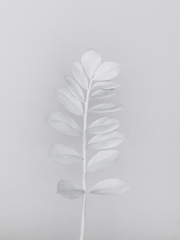 White Nature Valokuvavedos