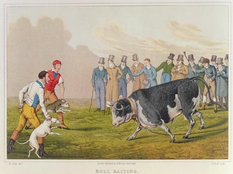 Bull Baiting', pub. by Thomas McLean, 1820 Lámina giclée