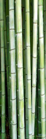 Tall Bamboo Photographic Print