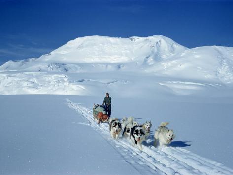 Dog Sleigh Team, Antarctica, Polar Regions Stretched Canvas Print