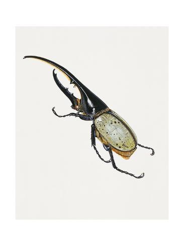 Hercules Beetle (Dynastes Hercules), Scarabaeidae. Artwork by Brin Edward ジクレープリント