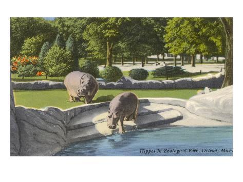 Hippopotamus in Zoo, Detroit, Michigan Art Print