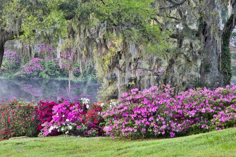 USA, South Carolina, Charleston, Calm Among the Flowers Premium Photographic Print by Hollice Looney at AllPosters.com