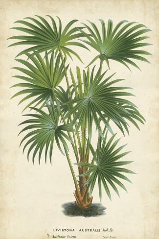 Palm of the Tropics IV Impressão artística