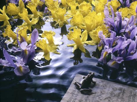 Frog, Sheet Music and Flowers in Water Photographic Print