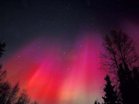 Curtains of Northern Lights above Fairbanks, Alaska, USA Photographic Print