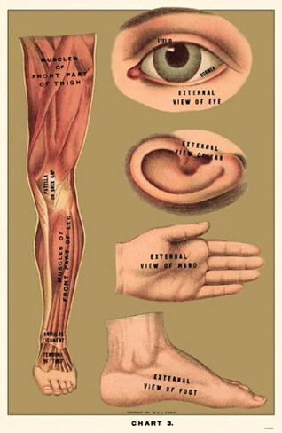 Human Body Parts Masterprint